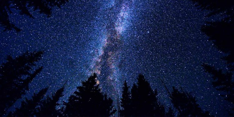 The Milky Way with silhouettes of pine trees