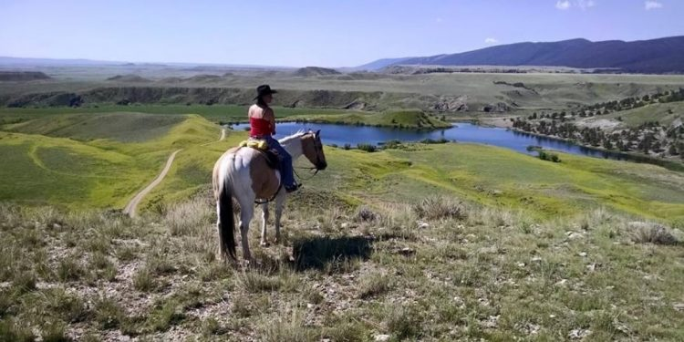 Horse overlooking the river at Klondike Ranch