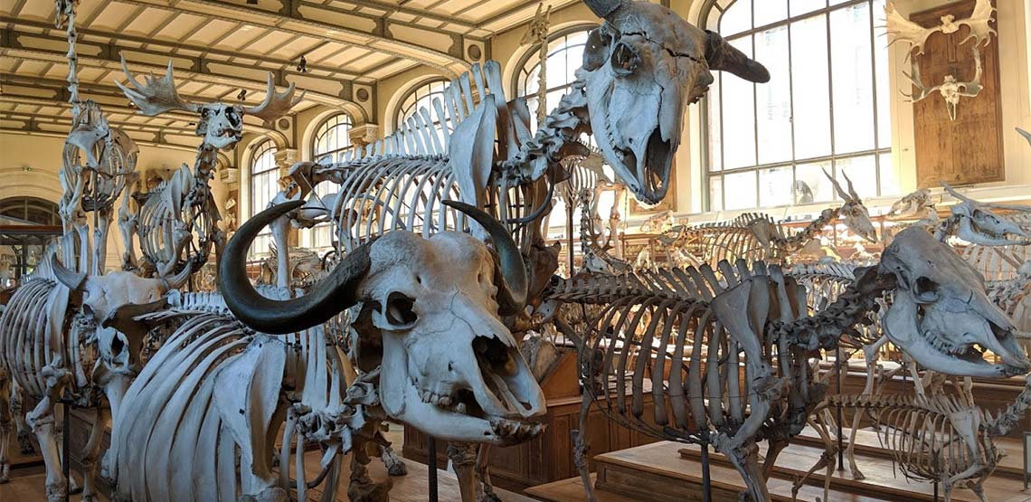 Skeletons in the Gallery of Paleontology
