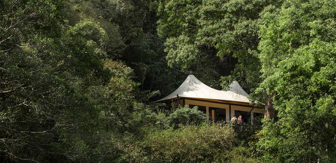 Tented camp in trees