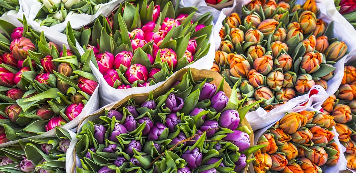 A close up of bunches of tulips for sale at an Amsterdam market, their bright blooms a riot of orange, purple, and scarlet.
