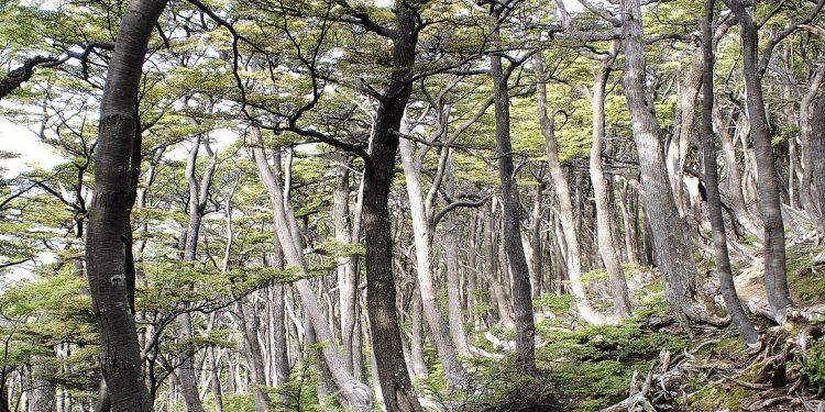 Gnarled, spindly limbed trees rise crookedly from a mossy forest floor.
