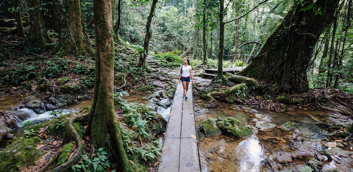 Someone walking in a forest in Thailand after a fresh rain shower.