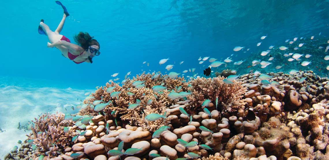 Someone snorkeling near coral and fish.