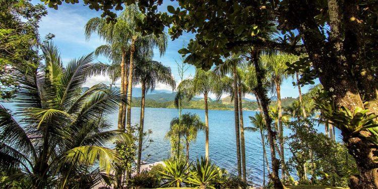 Palm trees on Japao Island.
