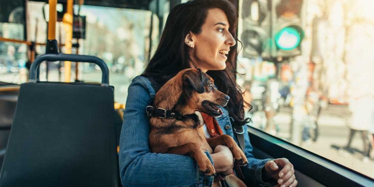 A woman holding a dog while riding on a bus.