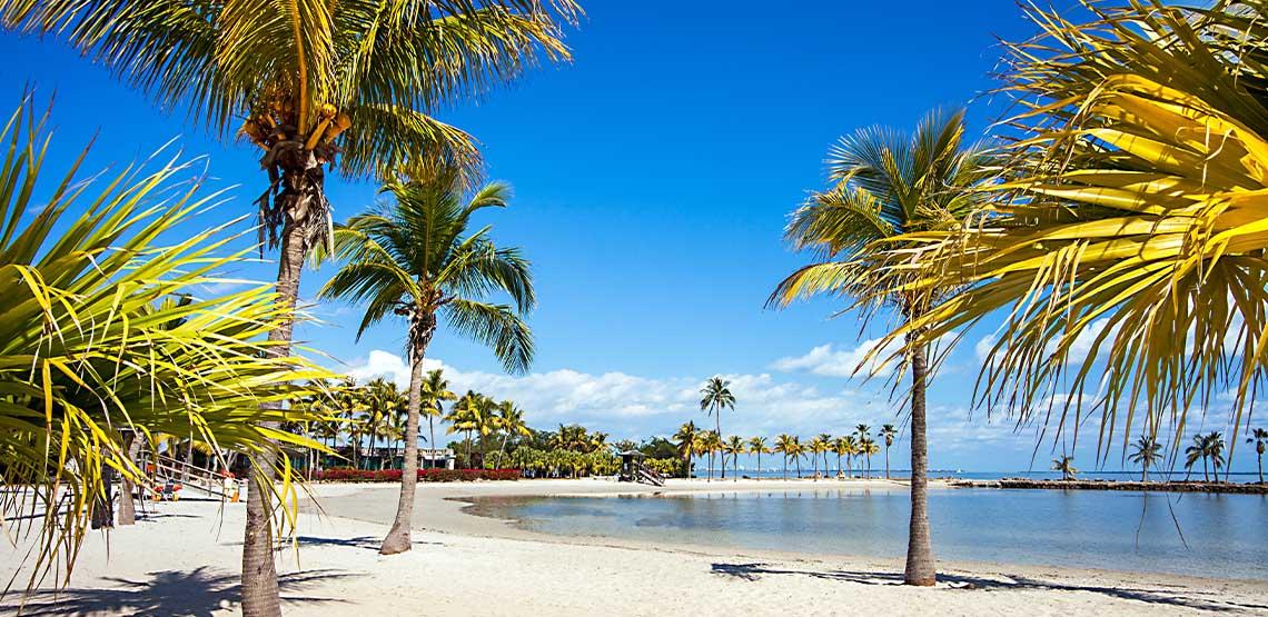 Palm trees, a beach and blue sky.